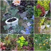 Beautiful plants with pots. Great offers