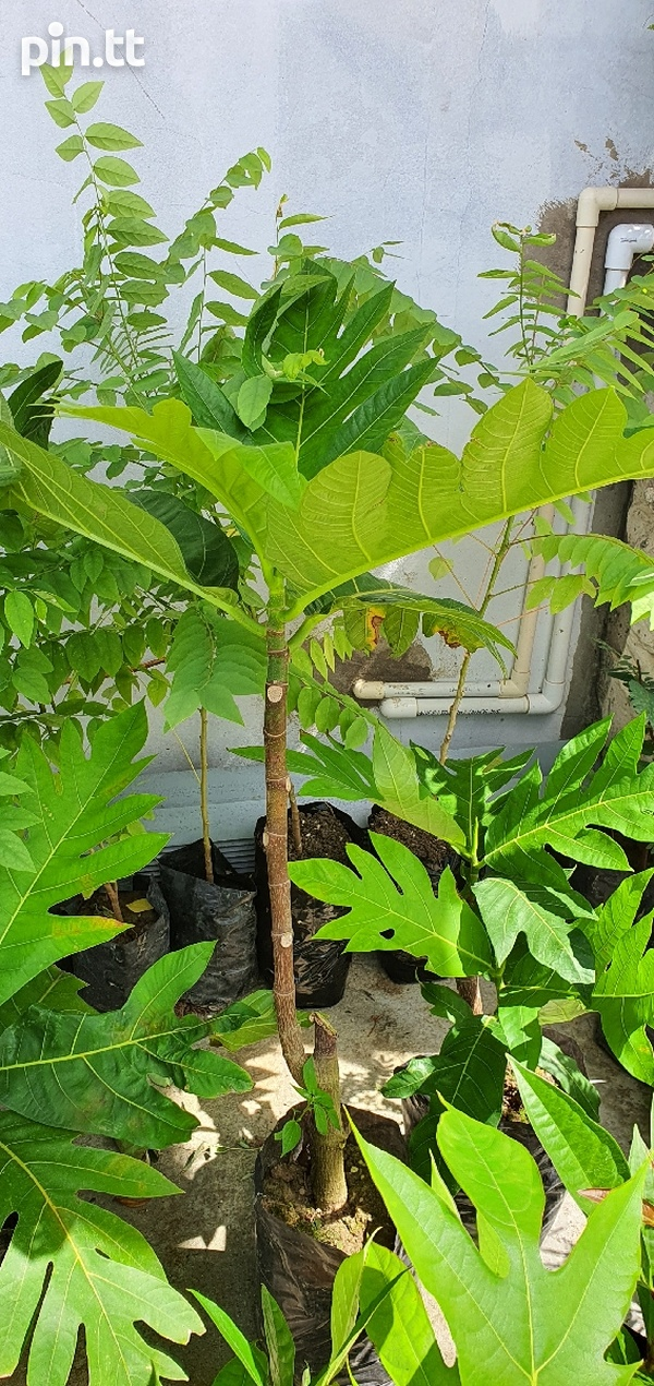 Plants...more pictures if you message-4