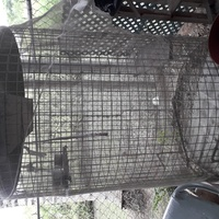 Cage 4ft tall, 2 doors 2x2 brc