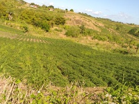 2 Acres of Agricultural Land