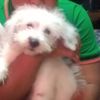 Maltipoo looking for his furever home
