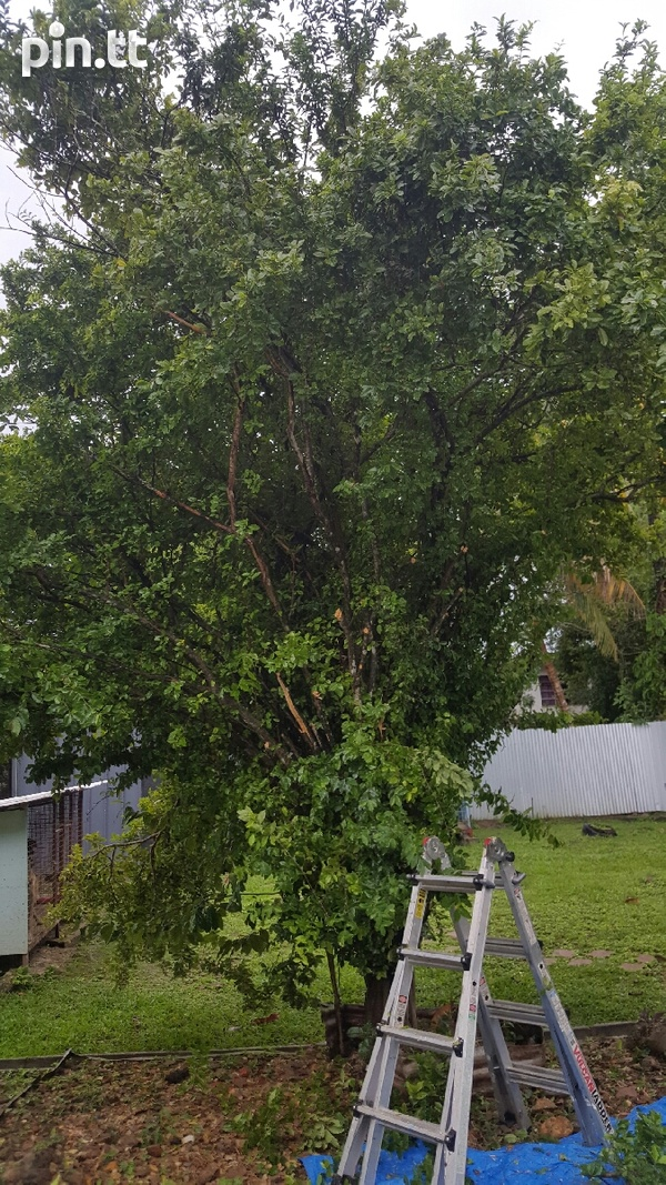 Overgrown tree cutting and yard cleaning-5