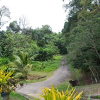 Toco 20 Acre Estate - Land