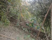 5 acres agricultural land in Penal