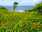 Residential Land Parcels at Hope Estate, Tobago