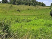 2 Acre Parcel Of Leasehold Land Williamsville