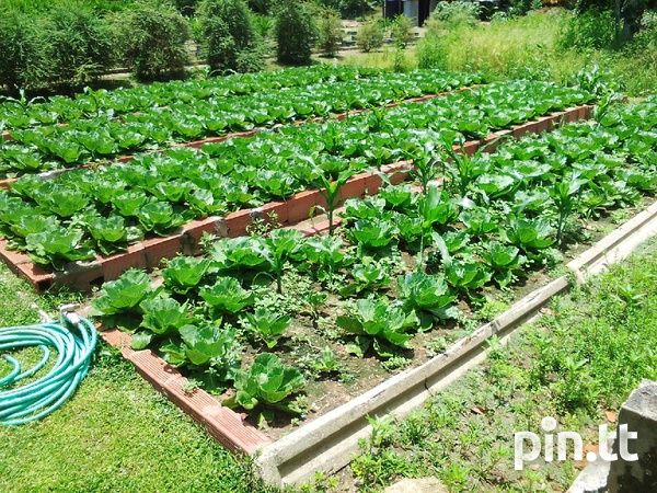 21 acres Talparo, 7 houses, fully cultivated-4