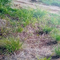 Barrackpore 1 Lot of Land