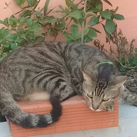 Neutered cat for free