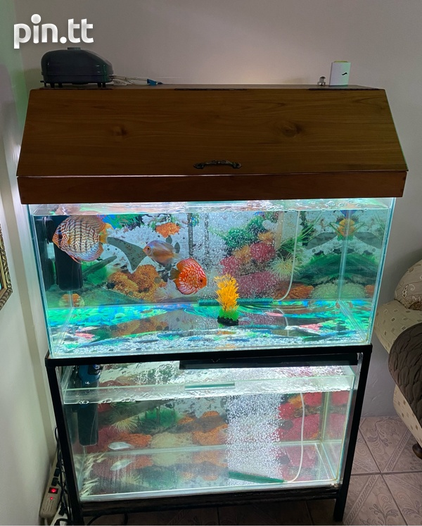 Two 3ft Fish Tanks-2