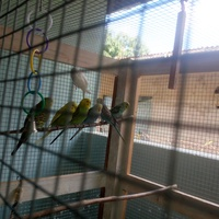 PET budgie of different colours