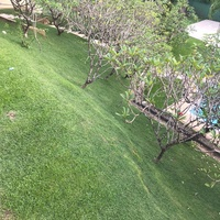 JXs Landscaping and Maintenance