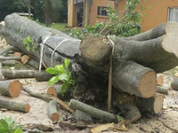 tree cutting and removel service