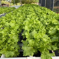 Complete hydroponic drip to waste system. Call 389 5504 for more information.