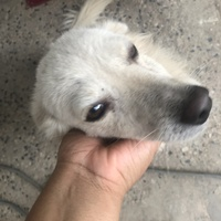 Sweet stray dogs urgently need a home