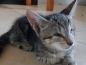 Four Kittens for Adoption...One remaining