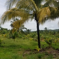 1 Acre of Freehold Agriculture Land