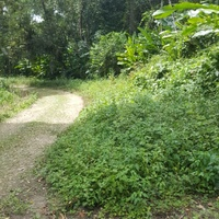 10 ACRES OF LAND RIO CLARO