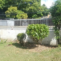 Tree cutting, grass cutting, hedge trimming/shaping,landscaping