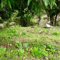 1 1/2 Lots Arima - All Approvals