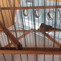 Bird and cage contact