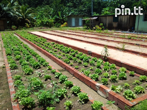 21 acres Talparo, 7 houses, fully cultivated-5