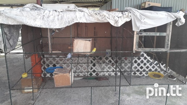 Budgies and cage-2