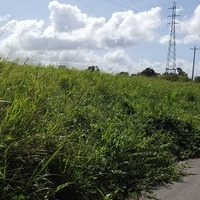 Land for Lease in Freeport