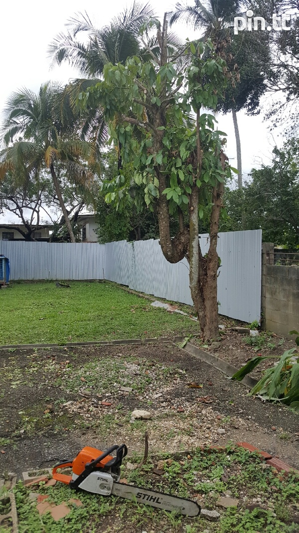 Overgrown tree cutting and yard cleaning-4