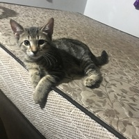 4 kittens looking for a home