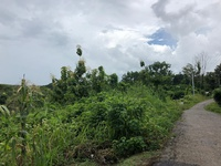 Plant Crops in Realize Rd Princes Town