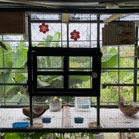 Breeding Budgies And Cage