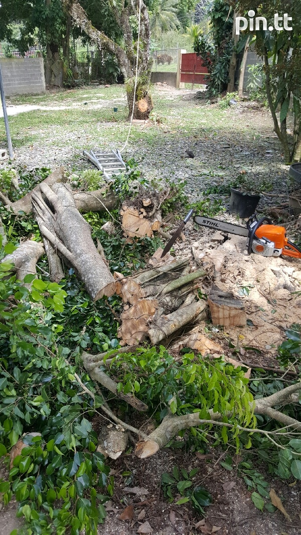 Tree removal-3