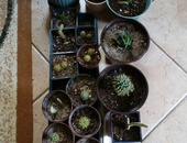 VARIOUS TYPES OF CACTI