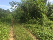 Agricultural Land at Anglais Road, Cumana