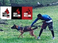 Para Bellum Kennels Dog Training and Canine Behaviour Modification