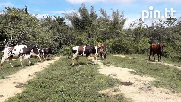 Agricultural Land and Farm-2