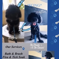 Portable Pet Grooming Service