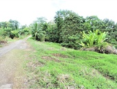 30 ACRE ESTATE OLD RIO CLARO MAYARO ROAD