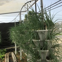 Mr. Stacky Vertical Hydroponic pots