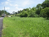 Sangre Grande Freehold Land