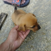 Looking for a home .puppy to give away.