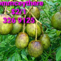 Pommecythere
