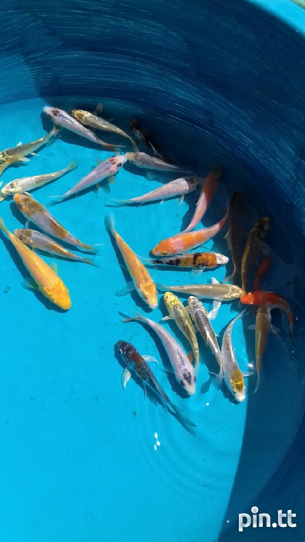 Fishes-2