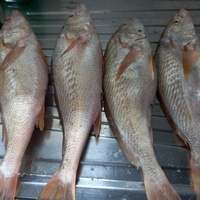 L and S fresh fish