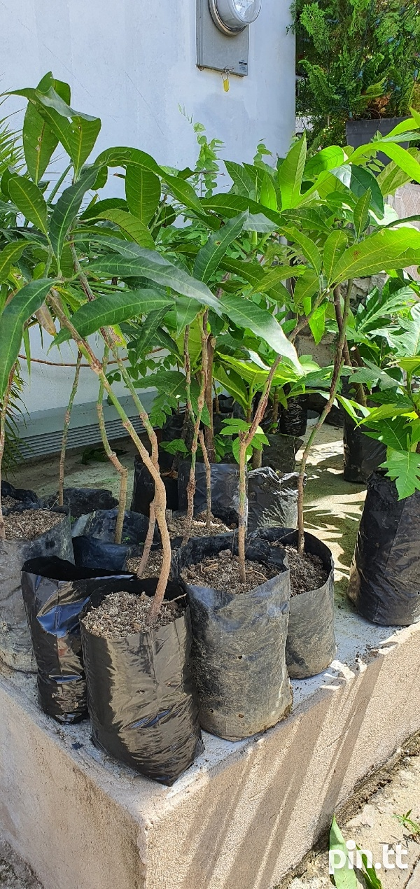 Plants...more pictures if you message-1
