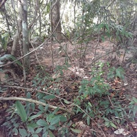 24 Acres of land with Red Sand aggregate