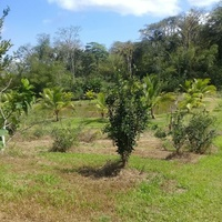 Agriculture Land, 7 Acres