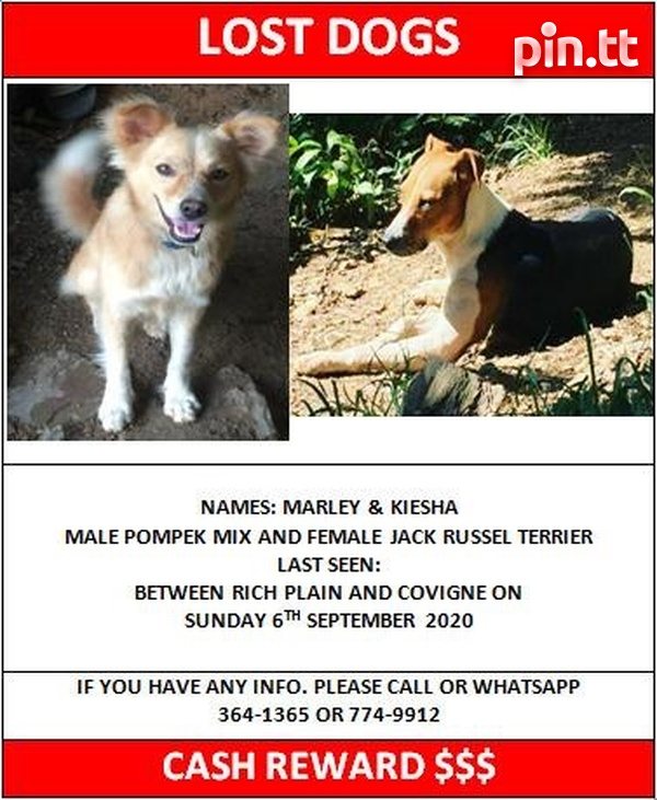 Lost dogs in Diego Martin