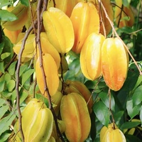 Star fruit plants west Indian cherry